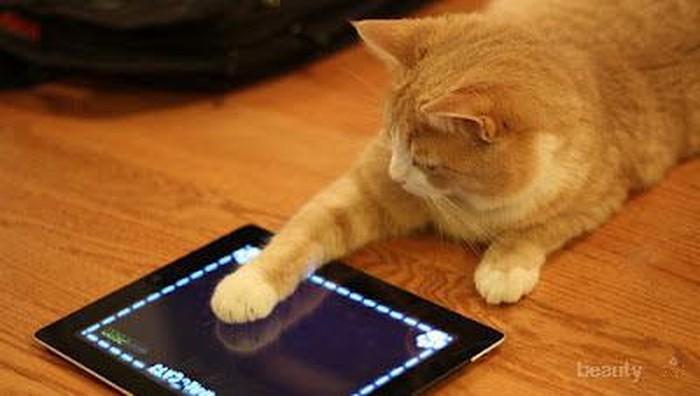 Pilih Game untuk Kucing Kesayangan