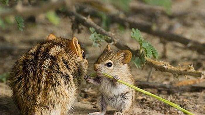 Indahnya Momen Kasih Sayang Binatang dan Induknya