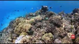 VIDEO: Menikmati Indahnya Bawah Laut Perairan Pulau Roon