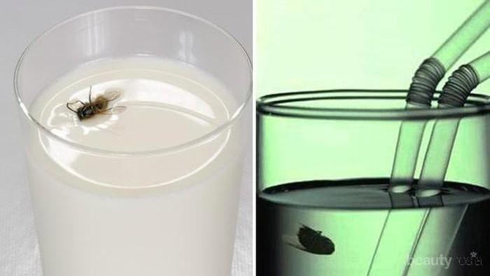 [FORUM] Kalo minuman sudah dimasuki lalat, better diminum atau gimana?