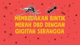 INFOGRAFIS: Beda Bintik Merah DBD dengan Gigitan Serangga