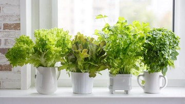 5 Tanaman Ini Cocok Untuk Menghias Dapur Rumah Minimalis