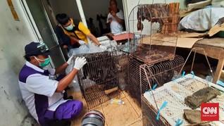 Cegah Corona, Pasar Depok Solo Musnahkan Ratusan Kelelawar