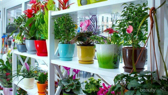 Inspirasi Tanaman Hias yang Mudah Dirawat dan Cocok Mempercantik Rumahmu