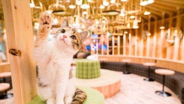 Gemas! 4 Kafe Kucing yang Nyaman dan Mencuri Perharian Pecinta Kucing