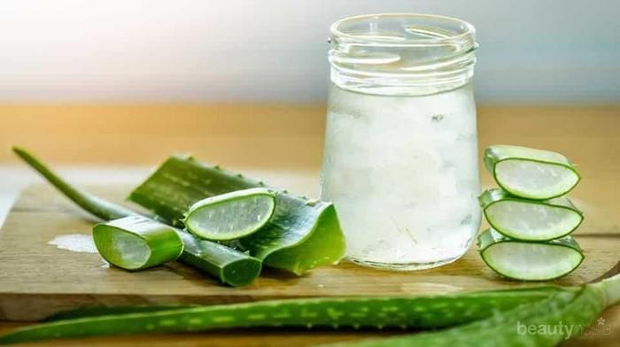 5 Alasan Produsen Kecantikan Gemar Menggunakan Aloe Vera dalam Kandungan Skincare