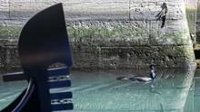 Dua Turis Jerman Didenda Karena Berenang di Kanal Venesia