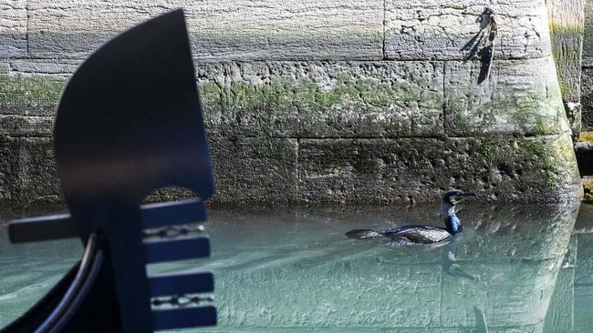 A seabird swims across clearer waters by a gondola in a Venice canal on March 17, 2020 as a result of the stoppage of motorboat traffic, following the country's lockdown within the new coronavirus crisis. (Photo by ANDREA PATTARO / AFP)