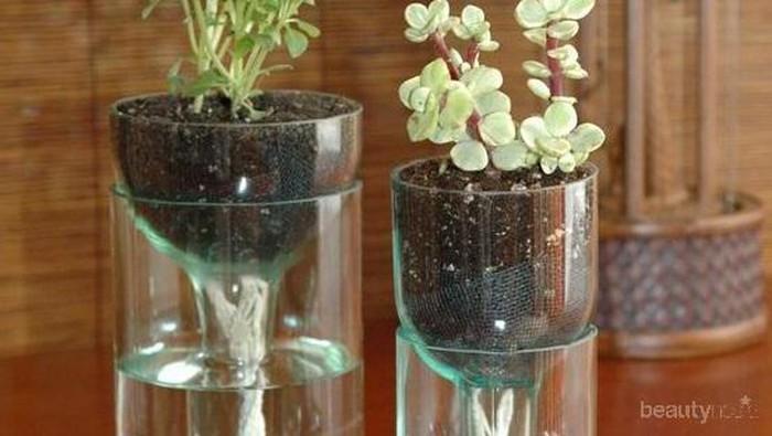 Tidak Suka Berkebun? Kamu Harus Simak Tips Mudah dan Manfaat Berkebun Hidroponik di Rumah