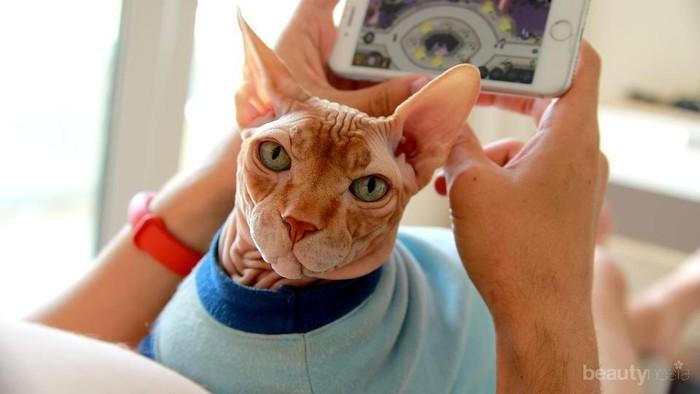 Terlihat Sangar dan Unik, Inilah Fakta Lain dari Kucing Sphynx