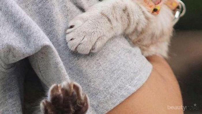 Waspadai 5 Hal Ini Jika Kucing Peliharaan Mengeong Terus-menerus!