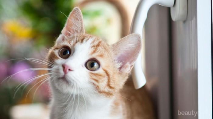 Punya Rumah Kecil dan Ingin Pelihara Kucing? Simak Tipsnya Berikut Ini