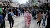 Di tengah-tengah upaya mengurangi kerumunan massa, bunga sakura bermekaran dan mengundang warga Jepang untuk pergi menikmatinya.