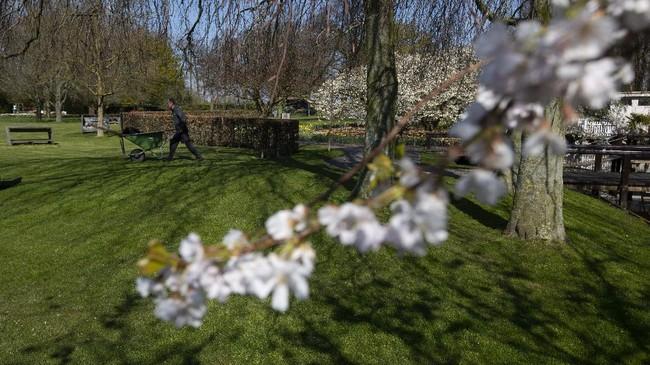 Tak ada turis di Taman Keukenhof tahun ini, karena pemerintah Belanda menerapkan pembatasan perjalanan hingga 1 Juni 2020.
