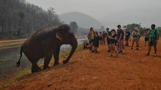 Lindungi Gajah, Sri Lanka Bakal Larang Impor Produk Plastik