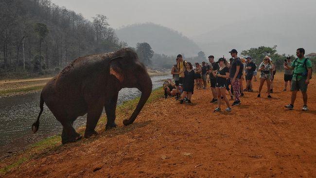 Pemerintah Sri Lanka bakal melarang impor produk plastik setelah menengarai plastik yang berada di tempat pembuangan sampah menjadi pembunuh utama gajah.