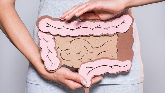 Sistem pencernaan manusia merupakan rangkaian jaringan organ yang mempunyai fungsi untuk mencerna makanan. Berikut organ dan fungsi sistem pencernaan manusia.