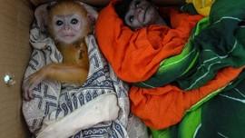 Pemerhati: Marak Korban PHK Jadi Pemburu dan Jual Satwa Liar