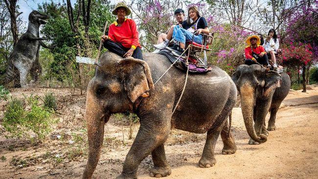 Sebelum virus corona saja kawanan gajah di Thailand sudah dipaksa bekerja keras demi menghibur di sirkus sampai di penebangan liar.