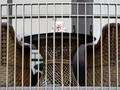 Kasus Covid Bertambah, Selandia Baru Mau Perpanjang Lockdown