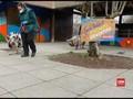 VIDEO: Aktivitas di Kebun Binatang London selama Lockdown