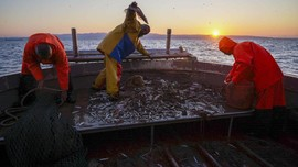 FOTO: Geliat Nelayan Italia di Tengah Tekanan Pandemi Corona