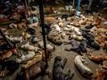 FOTO: Nasib Penampungan Anjing di Thailand akibat Pandemi