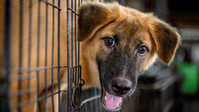 Polemik Penolakan 70 Anjing Milik Wanita Bercadar