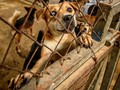 Yayasan Peduli Hewan Somasi Satpol PP Aceh soal Anjing Mati