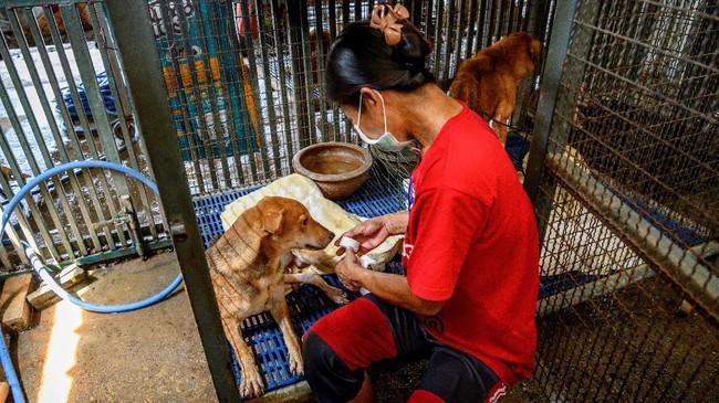 Pandemi virus corona bukan hanya menjadi tantangan bagi manusia, tetapi juga anjing-anjing yang berada di pusat penampungan di Bangkok, Thailand.