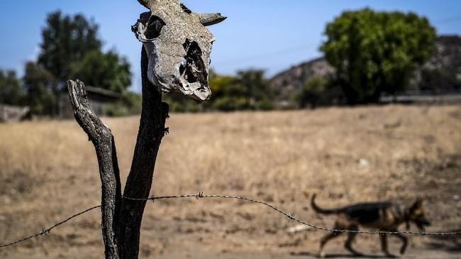 Bukan hanya keterbatasan pasokan air tanah, rendahnya curah hujan membuat kekeringan semakin parah. Tahun lalu, curah hujan di Santiago hampir 80 persen di bawah rekor terendah pada periode setahun sebelumnya.(Photo by Martin BERNETTI / AFP)