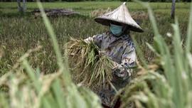 FOTO: Ketersediaan Pangan yang Terancam Pandemi Corona
