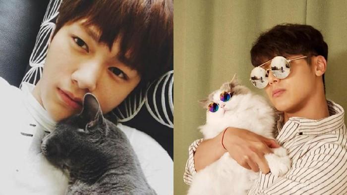 Super Gemas, 6 Selebriti Pria Korea Ini Ternyata Pecinta Kucing, Lho