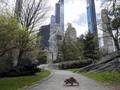'Melarikan Diri' dari Pandemi Corona di Central Park New York