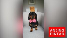 VIDEO: Anjing Dengan Jutaan Follower