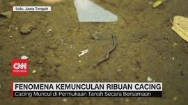 VIDEO: Fenomena Kemunculan Ribuan Cacing di Solo