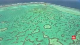 VIDEO: Peneliti Temukan Cara Selamatkan Great Barrier Reef