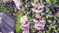 Salah satu bunga yang berada di taman di rumah Angie 'Virgin' di London, Inggris. (Foto: Instagram @angie_virgin)