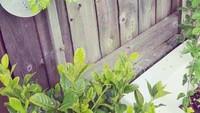 Angie 'Virgin' juga menggunakan pot gantung untuk tanaman-tanaman hijaunya. (Foto: Instagram @angie_virgin)