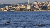 Dolphins swim in the straits of the Bosphorus where sea traffic has nearly come to a halt on April 25, 2020, as Turkish government announced a four-day curfew to prevent the spread of the epidemic COVID-19 caused by the novel coronavirus. - In the waters of the Bosphorus, dolphins are these days swimming near the shoreline in Turkey's largest city Istanbul with lower local maritime traffic and a ban on fishing. The city of 16 million has been under lockdown since Thursday as part of government measures to stem the spread of the coronavirus -- after two successive weekends. (Photo by Ozan KOSE / AFP)
