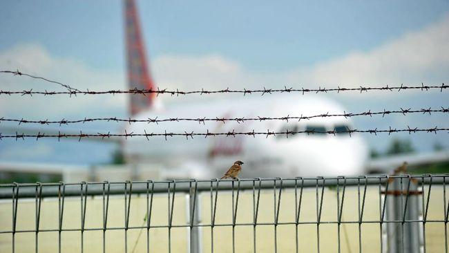 Seekor burung pipit dengan latar pesawat udara komersil yang tidak beroperasional, di Bandara Internasional Minangkabau (BIM), Padangpariaman, Sumatera Barat, Sabtu (25/4/2020). PT Angkasa Pura II selaku pengelola Bandara Internasional Minangkabau meniadakan seluruh penerbangan penumpang mulai Sabtu 25 April 2020 hingga 1 Juni 2020 menindaklanjuti Peraturan Menteri Perhubungan Nomor 25 Tahun 2020 tentang Pengendalian Transportasi Selama Musim Mudik Idul Fitri 1441 H dalam rangka Pencegahan Penyebaran COVID-19. ANTARA FOTO/Iggoy el Fitra/hp.