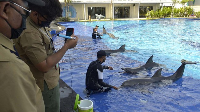 Petugas Balai Konservasi Sumber Daya Alam (BKSDA) Bali mengamati Lumba-Lumba di Bali Exotic Marine Park, Denpasar, Bali, Selasa (28/4/2020). BKSDA Bali melakukan pemantauan di sejumlah lembaga konservasi untuk memberikan edukasi serta memastikan satwa yang ada di lembaga konservasi tetap dalam kondisi yang baik dan tetap mendapatkan perlakuan sama dengan kaidah-kaidah kesejahteraan satwa selama masa pandemi COVID-19. ANTARA FOTO/Fikri Yusuf/hp.