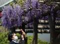 Kasus Menurun, Jepang Berencana Cabut Status Darurat Corona