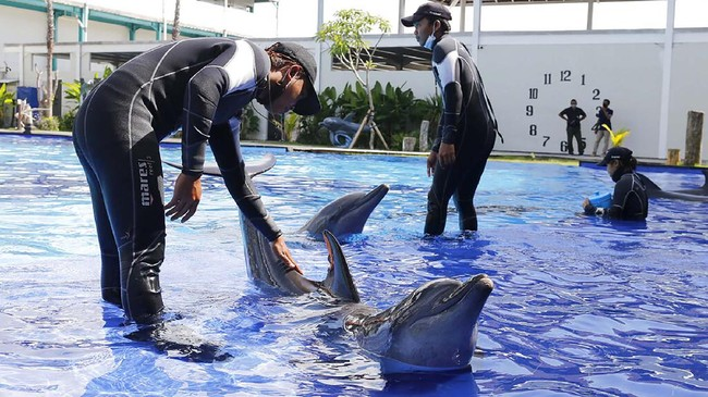 Trainers give a training to dolphins at a conservation center in Bali, Indonesia on Tuesday, April 28, 2020 during a temporal closure to public due to the concerns over a new coronavirus infection. All tourist attractions and sites have been asked to temporarily close as a measure to control the spread of the virus outbreak. (AP Photo/Firdia Lisnawati)