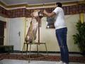 Tiga Generasi Keluarga Pelatih Singa di Mesir