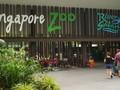 Singapore Zoo Sepi, Sekelompok Penguin Asyik Keluar Kandang