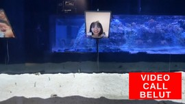 VIDEO: Khawatir Lupa, Belut di Jepang Video Call Manusia