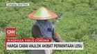 VIDEO: Harga Cabai dan Telur Turun
