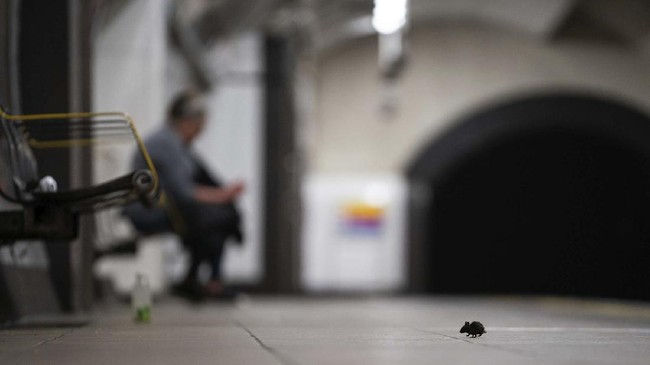 A mouse sits on an empty tube platform on the Central Line as the UK continues in lockdown to help curb the spread of the coronavirus in London, Monday, May 4, 2020. (Aaron Chown/PA via AP)