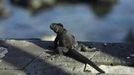 Formasi Batu Darwin's Arch Runtuh Akibat Erosi